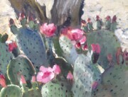 Prickly Pear, Sun City West